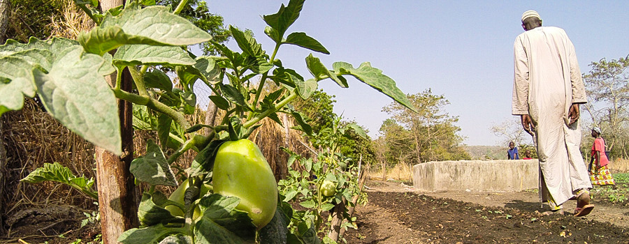 Vegetable gardens projects in Senegal